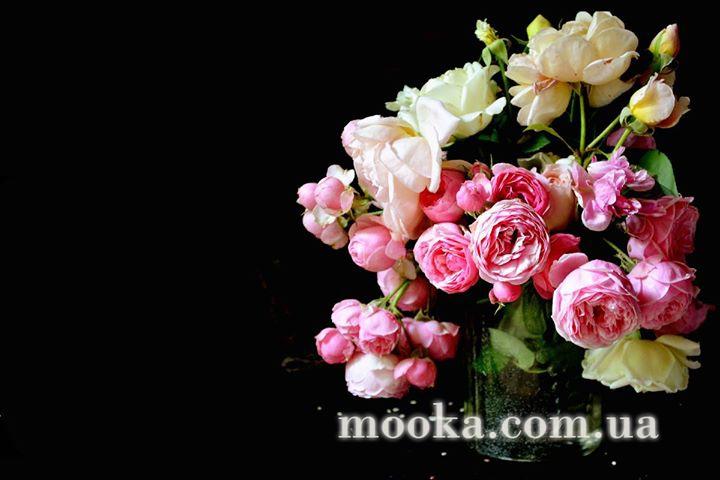med_gallery_4_1123_18693.jpg