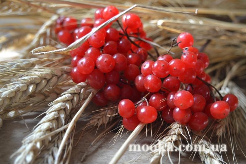 med_gallery_4_909_1981446.jpg