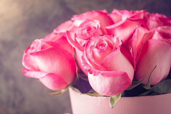 Roses_Closeup_Pink_color_552274_600x400.jpg.ebb85eea1fc9748c597c0bb3d4e458a3.jpg